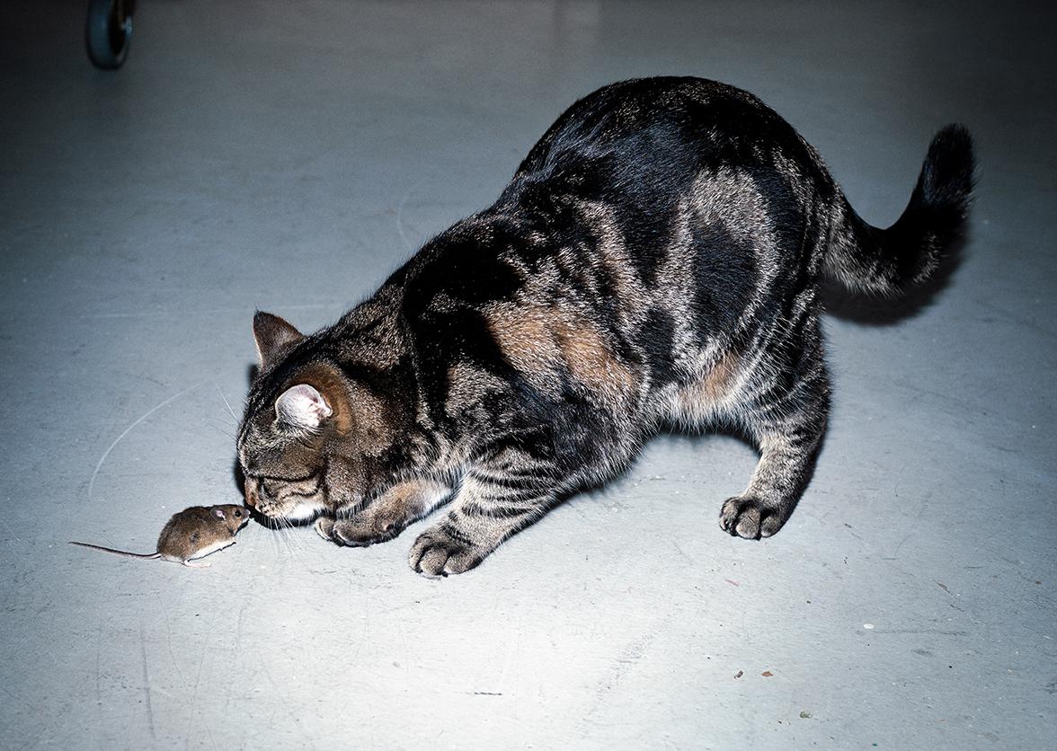 my-cat2